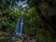 Otway-Ranges-Rainforest-02052020Beauchamp-Falls-VIC-0015