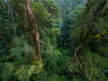 Otway-Ranges-Rainforest-2020-February-VIC-0548