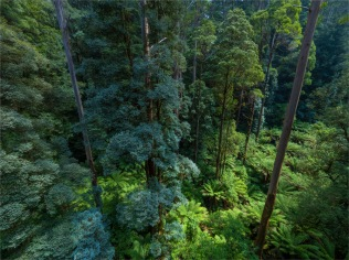 Otway-Ranges-Rainforest-2020-February-VIC-0551