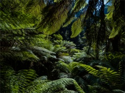 Otway-Ranges-Rainforest-2020-February-VIC-0578