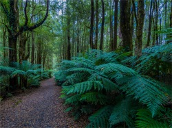 Otway-Ranges-Rainforest-2020-February-VIC-0594