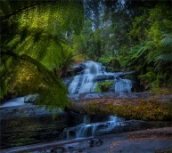 Otway-Ranges-Rainforest-2020-Triplet-Falls-February-VIC-0026