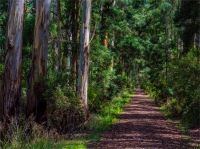 Tiger-Rail-Trail-02042020-Forrest-VIC-0092