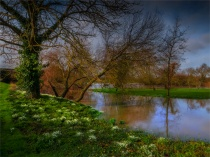 Stour-River-Winter-Flood-2020-Feb-Dorset-ENG-0022