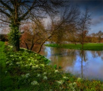 Stour-River-Winter-Flood-Snowdrops-2020-Feb-Dorset-ENG-0022